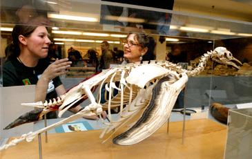Photo By Peg Skorpinski, features animal bones on display