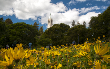 campanile with yellow flowers