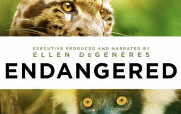 Cover image of documentary Endangered, showing endangered leopard and primate faces
