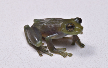 A frog against a white  background.
