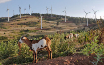 The Ngong Hills wind farm outside Nairobi, Kenya, is an example of land used for multiple purposes: recreation, energy generation and livestock grazing. (Grace Wu photo)