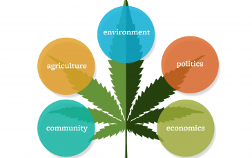 Infographic featuring a cannabis leaf and the sectors of the economic and environment that cannabis farming impacts