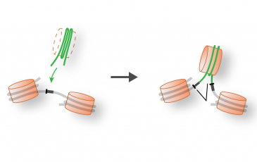 Graphical representation of introns and genomes