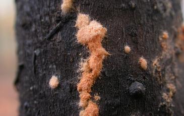 Neurospora fungus growing on dead wood