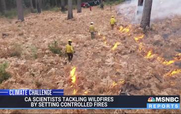 Screen image of MSNBC segment, showing three researchers setting fire