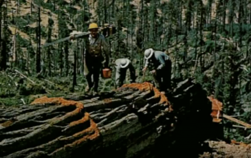 old photograph of foresters