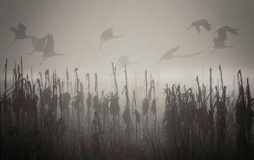 Photo of fog.