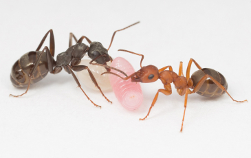 ants and larvae