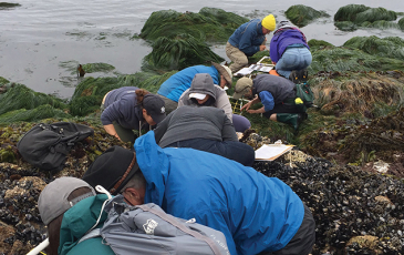 Citizen Scientists gathering data in a tidepool