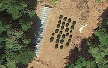Cannabis grow site image from Google Earth.