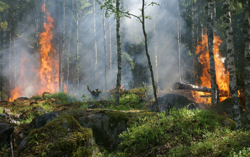Small fire in forest understory