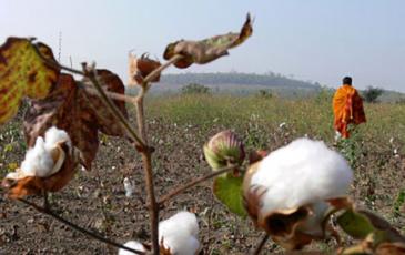 Indian farmer in a field