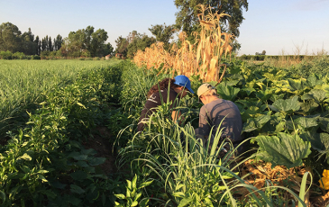 Two interns collect plant and soil samples in a polyculture field