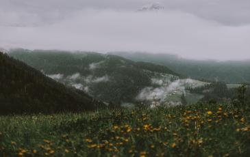 Meadow on mountain.