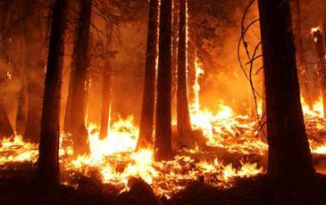 The 2013 Rim Fire in California