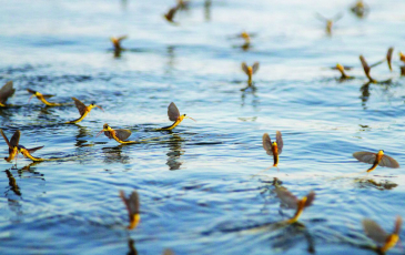 Insects on a body of water