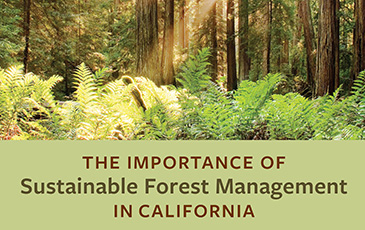 The Importance of Sustainable Forest Management in California