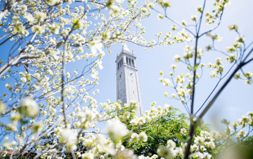 Spring flowers on a branch with Campanile in background