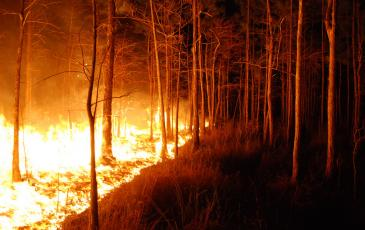 Image of a wildfire