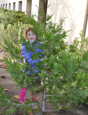 Holiday trees for sale