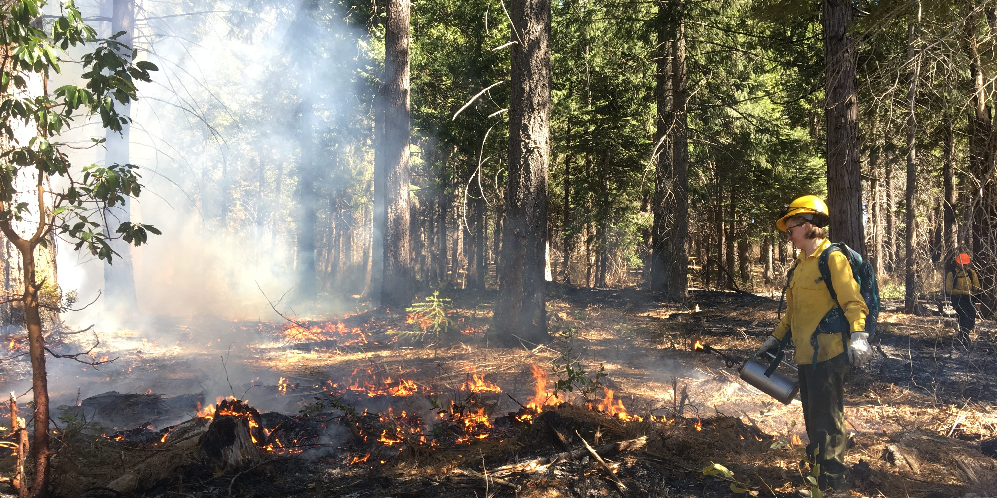 fire wildland term paper Teamwork is essential in the demanding role of a wildland fire crew member your training will include a broad range of topics including ecosystem-based management, emergency response, hazardous materials and wildland fire practices.