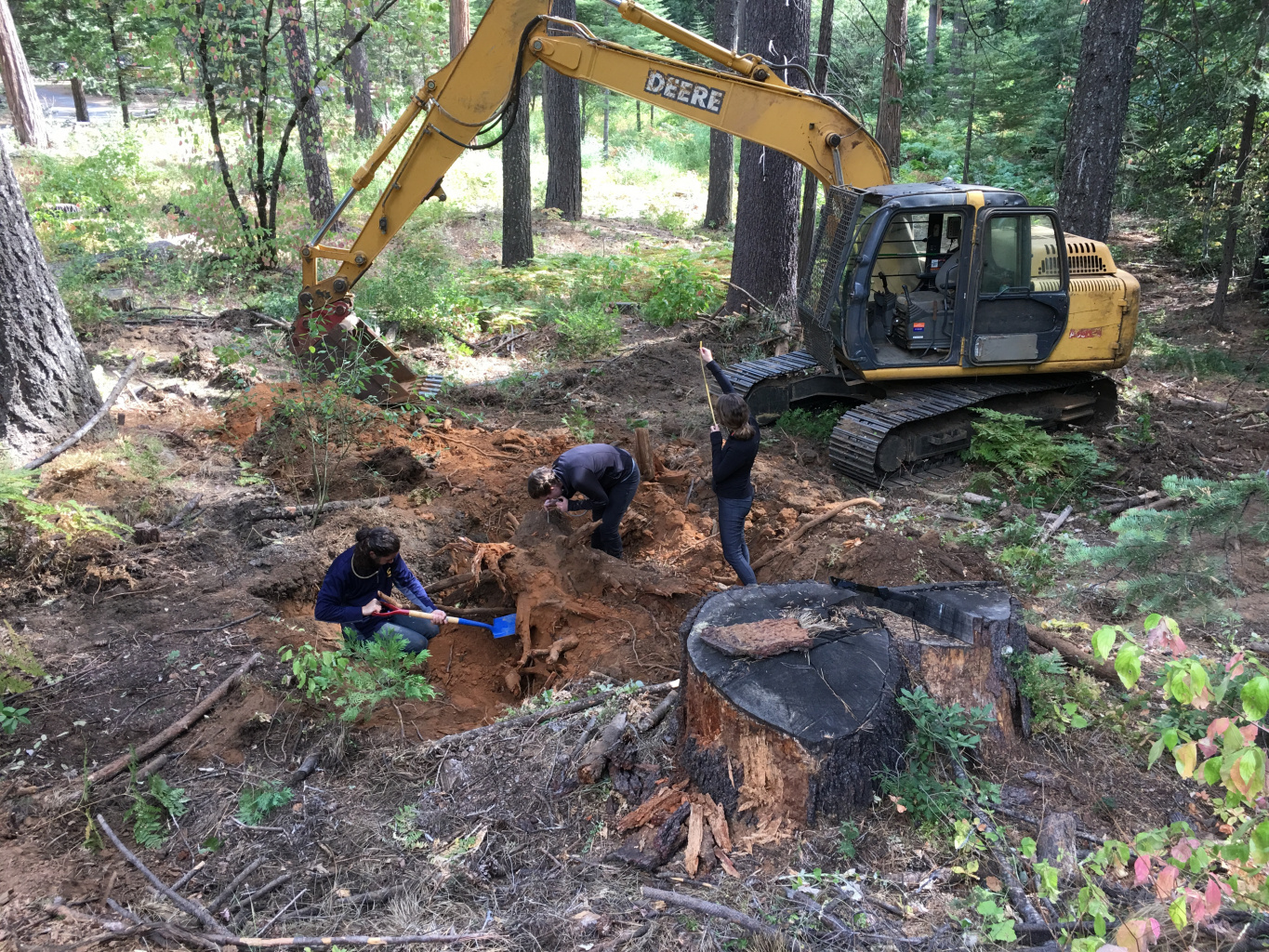 Digging up a Formica nest
