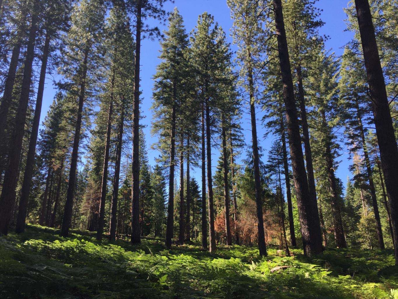 Blodgett Forest