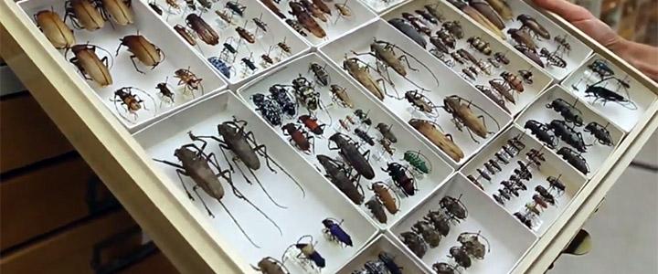 CalBug – California Terrestrial Arthropods Database