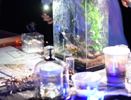 California Academy of Sciences Nightlife – Creatures